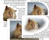 Collage aus verschiedenen Bilddarstellungen in einem Word-Dokument