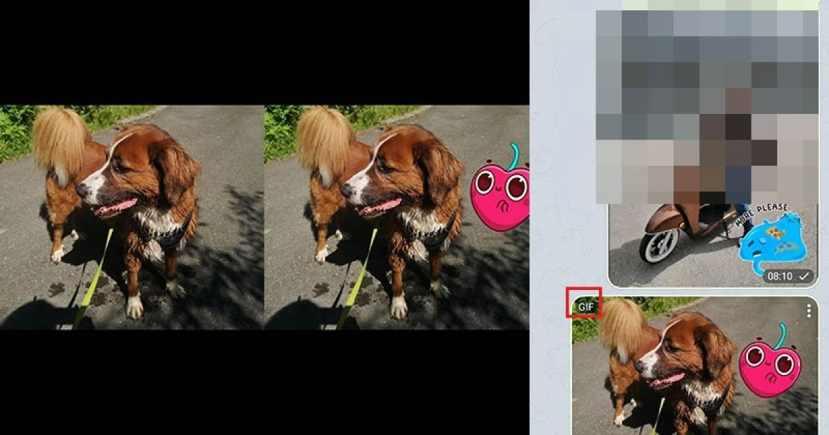Telegram Animierte Sticker
